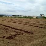 みんなの栽培日記|2015/05/03_福島市佐倉下の畑にて。