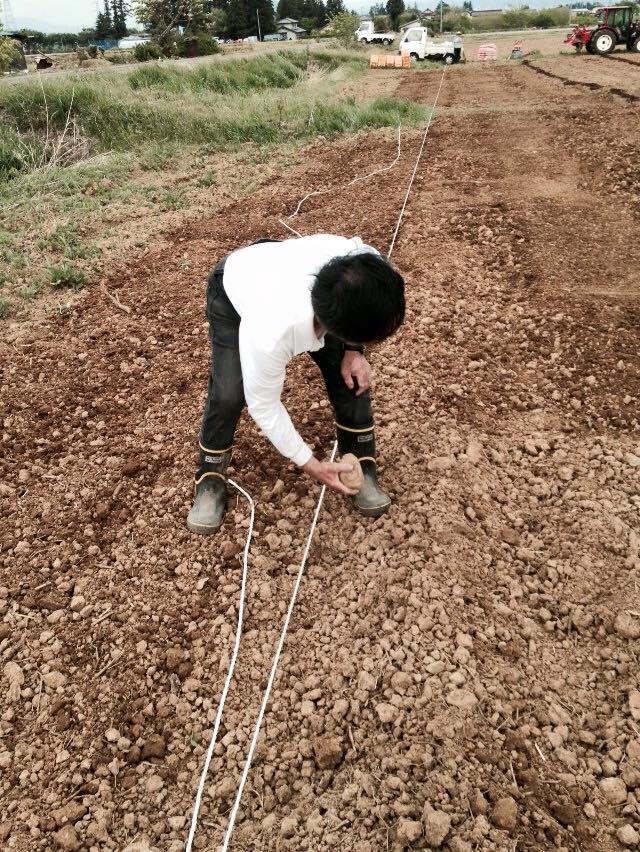 みんなの栽培日記|2015/05/04_福島市荒井の畑にて。