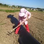 みんなの栽培日記|2015/05/05_福島市佐倉下の畑にて。