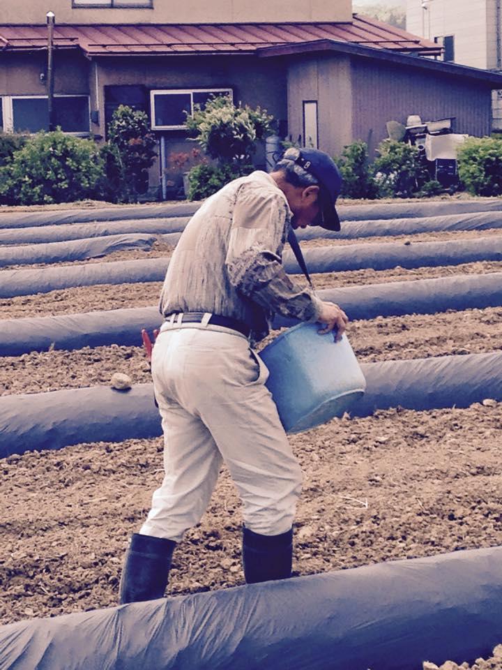 みんなの栽培日記|2015/05/10_福島市荒井の畑にて。
