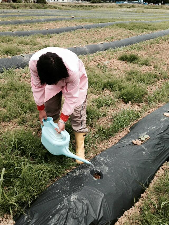 みんなの栽培日記|2015/06/05_福島市佐倉下と荒井の畑にて。