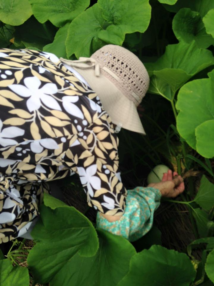 みんなの栽培日記 2015/08/02_岩手県遠野市の畑にて(その2)。