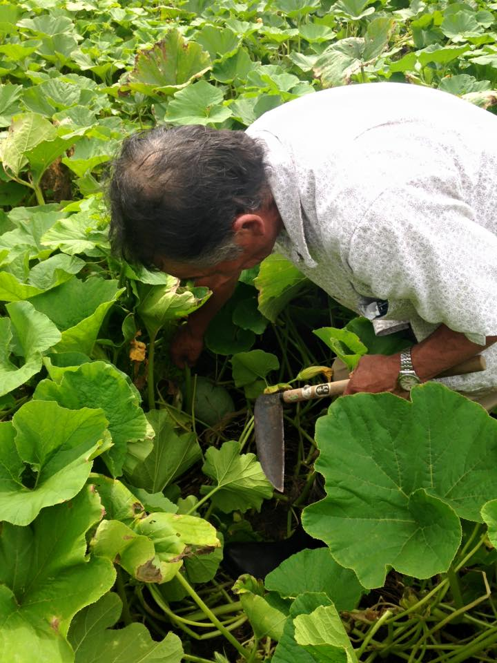 みんなの栽培日記|2015/08/19_福島県二本松市の畑にて。